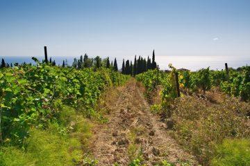 Maremma Wine Food Shire 2014, Grosseto 16-18 Maggio, rassegna enogastronomica per scoprire la complessa bellezza di questa terra toscana