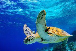 Il significato della tartaruga nella storia dell'uomo