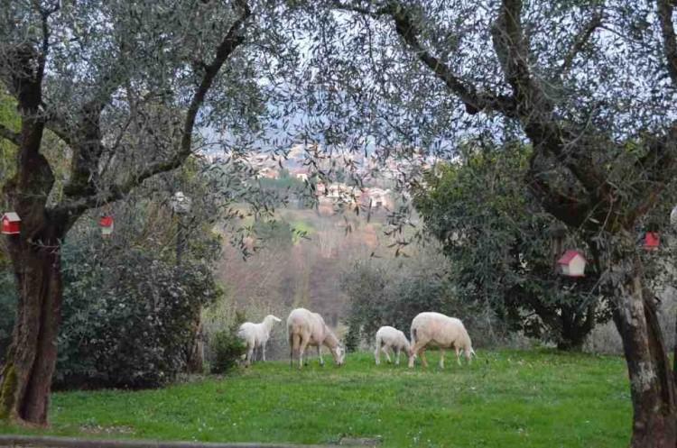 Agriturismo Olivanda, angolo di paradiso toscano, circondato da verdi colline e uliveti secolari, a 5 minuti dal centro di Montecatini Terme