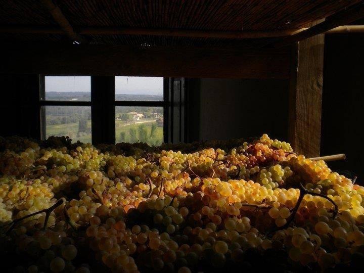 La Fattoria Palazzo Vecchio si trova a Montepulciano, zona ottimale per la produzionde del vino. Produce 5 etichette, organizza degustazioni e cene in vigna