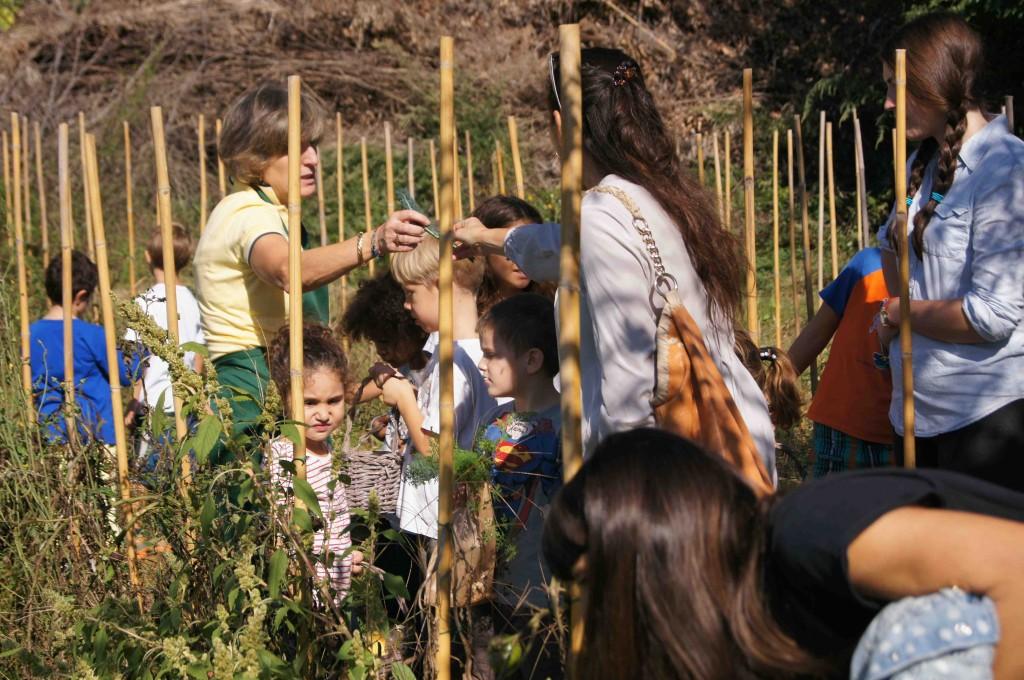 """""""Ti porto nell'Orto"""" è un'iniziativa organizzata dall'Orto Biologico Palmi Palm-Orto, presso i PalmiGiardini a Firenze, per scoprire il mondo del biologico"""