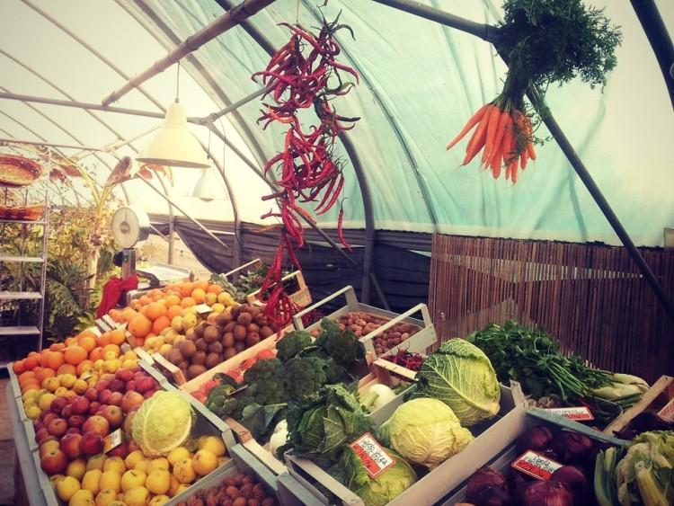 Orto del Palmi: l'orto biologico a Firenze dove comprare on line o per telefono frutta e verdura con consegna gratuita a domicilio