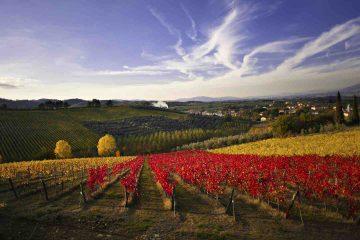 Il Consorzio Chianti Colli Fiorentini raccoglie 33 cantine del territorio fiorentino e da 20 anni rappresenta un sinonimo di qualità.