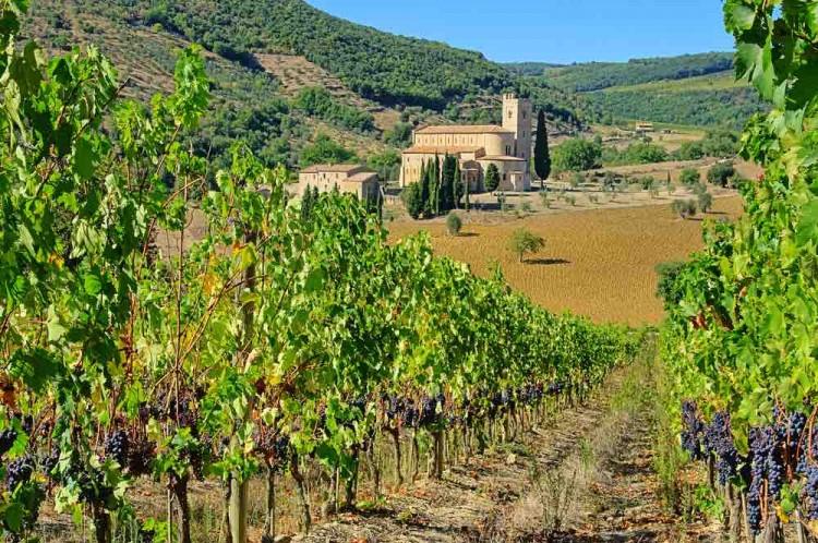 Vigne e Abbazia di Sant'Antimo a Montalcino