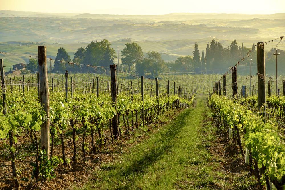 Vigne di Montalcino
