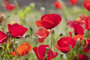 FloraFirenze è uno dei più grandi eventi floricoli europei dedicato. Si svolge nel Parco delle Cascine a Firenze dal 30 aprile all'11 maggio 2015, costo 20€