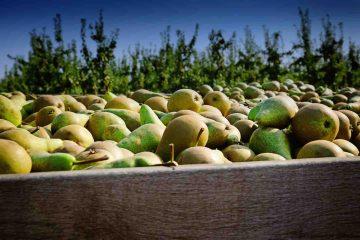 L'Azienda Agricola Radici è l'azienda 100% biologico Made in Tuscany che gestisce il reparto ortofrutta da Eataly a Firenze, garanzia di qualità e bontà