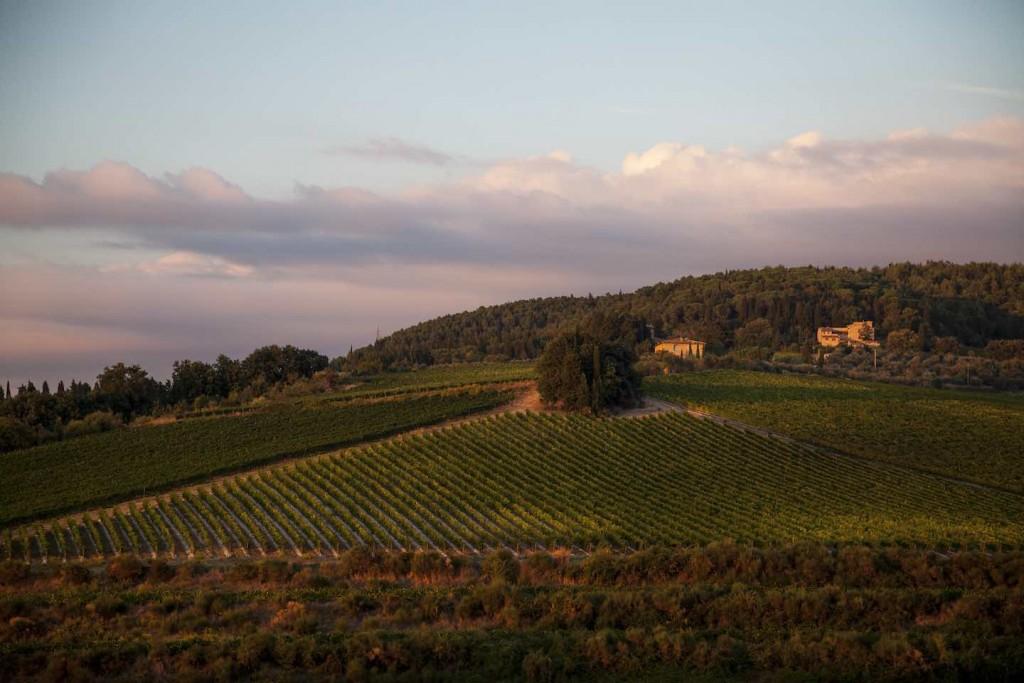 Giacomo Tachis ha rivoluzionato il mondo del vino toscano creatore, insieme ai Marchesi Antinori del Tignanello e del Sassicaia.Intervista a Ilaria Tachis