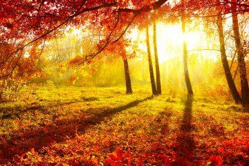 Autumnia 2015, 6-8 novembre a Figline Incisa Valdarno il protagonista è l'autunno. Giochi, fotografia, street food, show cooking e spettacoli animeranno la città.