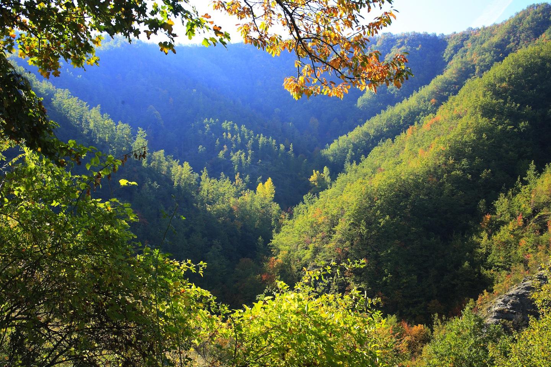 Parco delle Foreste Casentinesi in un giorno di sole in estate