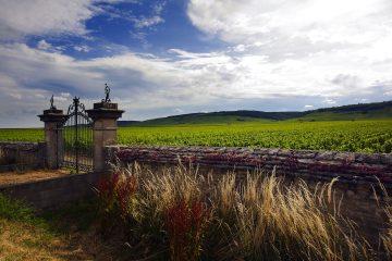 Dijon è la capitale della Borgogna in Francia, una terra ricca di storia, cultura, arte e prodotti tipici, tra cui il vino e la famosa Senape di Dijon