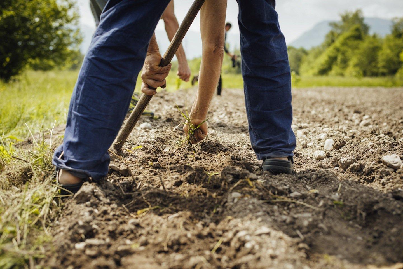 La biodinamica, la permacultura e la coltivazione idroponica rappresentano nuove tecniche alternative all'agricoltura tradizionale