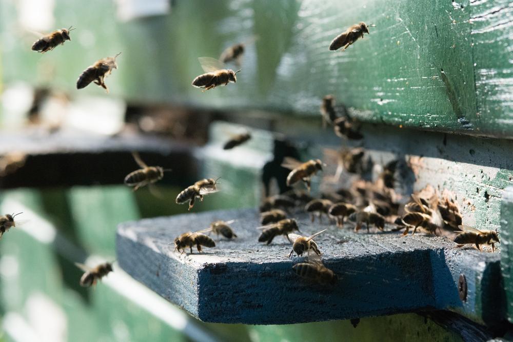 Il miele toscano è un prodotto tradizionale della regione. Molti sono gli apicoltori in Toscana che hanno vinto premi per la produzione di mieli biologici.
