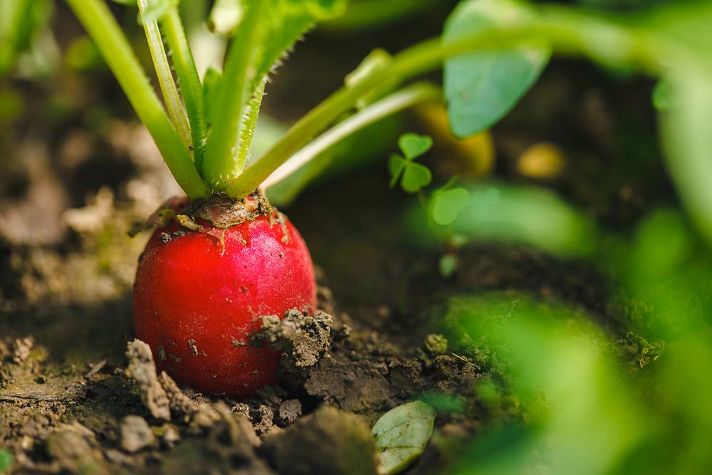 Ogni anno in Toscana cresce il numero di imprese che fanno dell'agricoltura biologica e del rispetto per la terra la loro filosofia aziendale