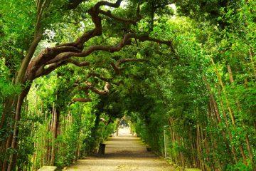 Durante l'afosa estate i giardini fiorentini sono i luoghi dove rifugiarsi dalla calura, rilassandosi sotto ombrose trame fatte di alberi, storia e mistero