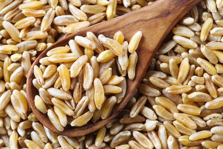 Il kamut, ovvero grano QK-77, è tra gli antichi cereali uno dei più conosciuti, grazie all'ottima strategia di marketing della famiglia Quinn