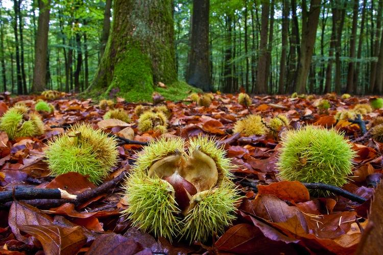 L'autunno è la stagione ideale per raccogliere i frutti del bosco: dai commestibili come funghi, castagne e bacche a quelli per decorare casa