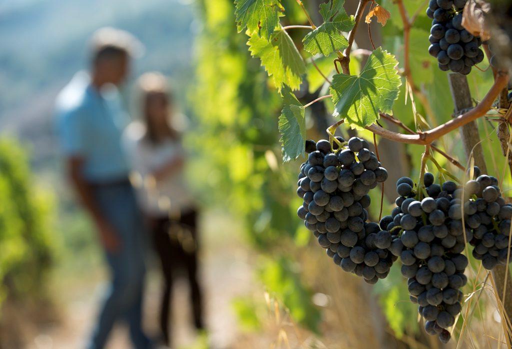 Valeria Viganò è la Presidente dell'Unione Viticoltori di Panzano e proprietaria dell'agriturismo Le Cinciole sui colli di Panzano in Chianti