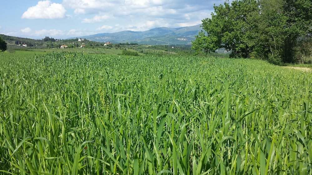 La Fattoria Biologica Monna Giovannella è un'azienda che si trova sui colli fiorentini. Produce grani antichi, olio, birra e miele biologico