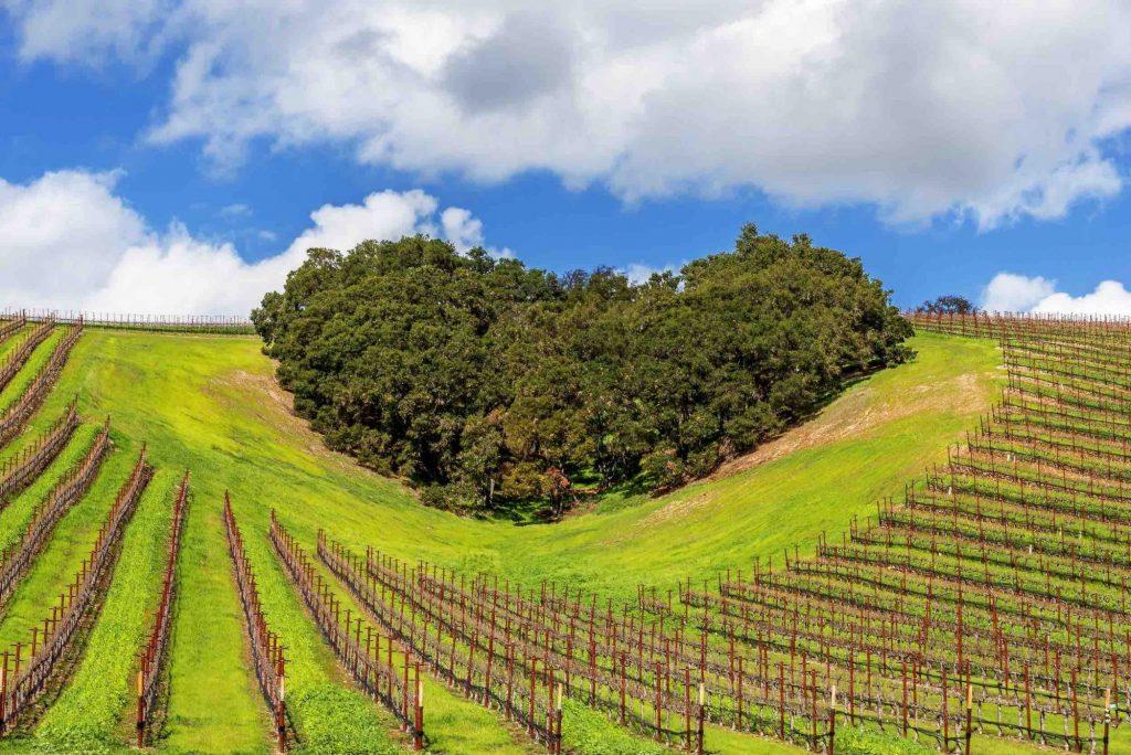 Storia del vino in toscana dagli etruschi ai vinattieri for Eventi in toscana oggi
