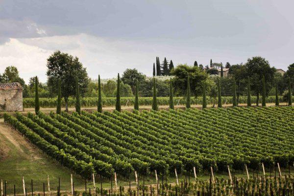 La Tenuta Sette Ponti si trova nel Valdarno di Sopra, in Toscana, e tra le sue etichette conta vini di pregio quali il Crognolo e l'Oreno