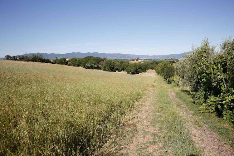 Azienda Agricola Vestri si trova a Marciano della Chiana, Cortona, e porta avanti il metodo di coltivazione legato all'agricoltura naturale