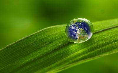 L'ecocosmesi è l'ultima arrivata in casa ecosostenibilità e prodotti naturali.I cosmetici biologici rispettano l'ambiente, l'uomo egli animali