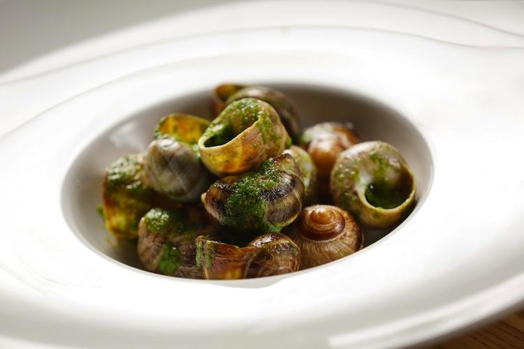 Gli allevamenti di chiocciole in Toscana, allevano la Helix Axpersa Muller: chiocciola toscana ottima da mangiare e da usare in cosmetici eco biologici.