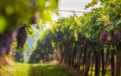 14 Strade del Vino in Toscana: itinerari unici che permettono di conoscere la vera anima del made in Tuscany in una Real Tuscan Experience.