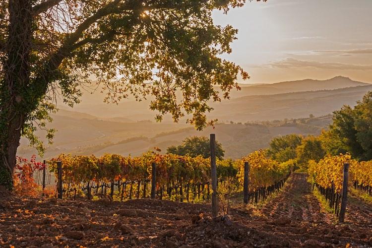 14 Strade del Vino in Toscana: itinerari unici che permettono di conoscere la vera anima del made in Tuscany in una real tuscan experience