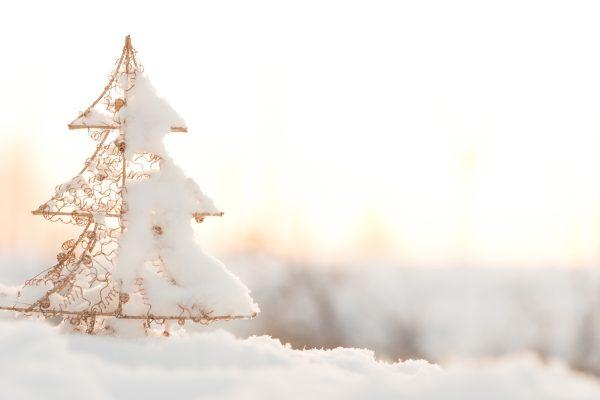 La Toscana è la principale produttrice di alberi di Natale. Come nasce la tradizione dell'albero di Natale e da dove provengono gli abeti