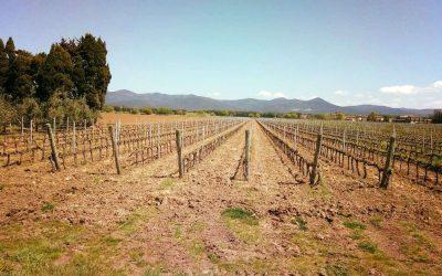 L'Azienda Agricola Imperiale di Bolgheri è un'azienda biologica toscana che produce vino, miele, olio, farina e pasta di grani antichi