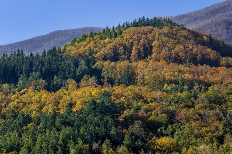 Le Oasi del WWF in Toscana sono in tutto 17 diffuse su tutto il territorio: dalla Bassa Maremma alla Versilia fino all'Appennino Pistoiese