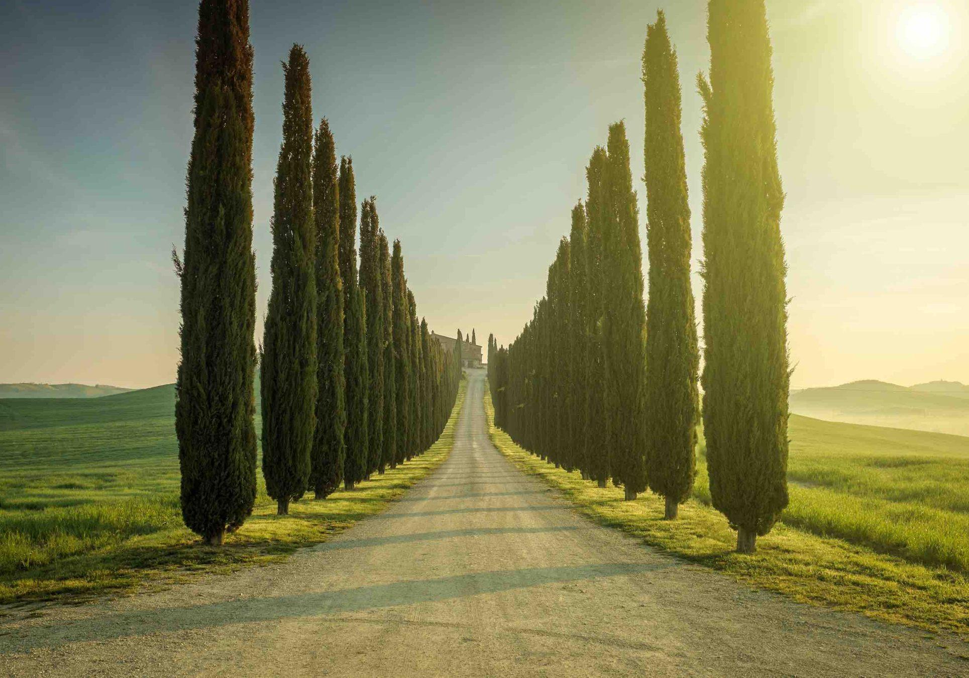 I cipressi in Toscana sono un simbolo di eternità e di immortalità e sin dai tempi antichi sono i protagonisti assoluti del panorama toscano.