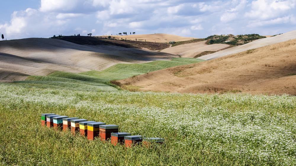 La Toscana vanta ben 16 DOP e 15 IGP tra i suoi migliori prodotti tipici, considerati come vere eccellenze alimentari toscane.