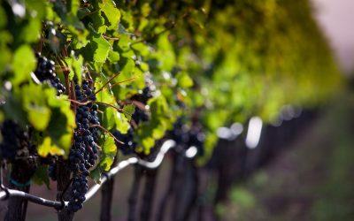 Il Sassicaia 2015 è stato eletto miglior vino del mondo dal Wine Spectator, confermando il primato toscano nella scena dell'enologia mondiale