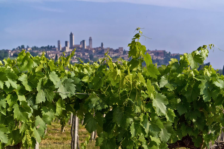 La Vernaccia di San Gimignano è uno de vini bianchi toscani con la DOCG. Famosa già dal tempo dei Medici, ve ne consigliamo alcune etichette