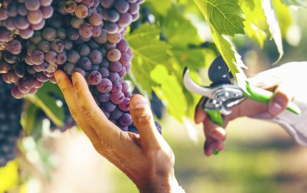 Il Biodistretto del Chianti è un'area geografica votata alla produzione biologica e occupa il 30% di tutta la superficie Vitivinicola coltivata tra Firenze e Siena.