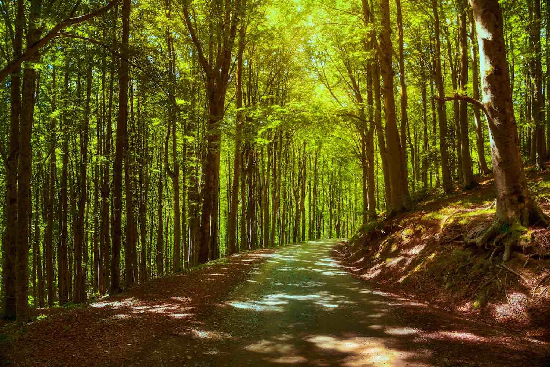Il Sentiero delle Foreste Sacre è un itinerario in 7 tappe di 100 km, all'interno del Parco Nazionale delle Foreste Casentinesi in Toscana