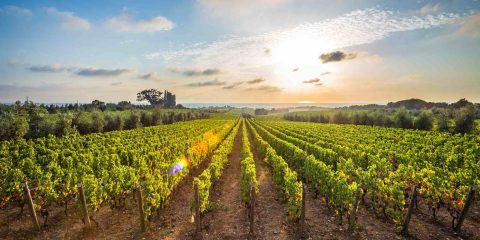 La DOC di Bolgheri è oggi una delle Denominazioni di Origine Controllata più importanti della Toscana, grazie anche al lavoro delle aziende biologiche e biodinamiche.