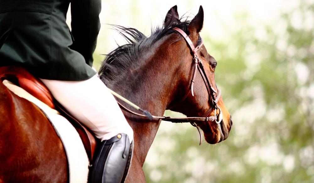 Matteo Giunti, cavaliere di fama internazionale, sul suo cavallo
