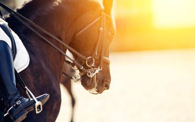 Matteo Giunti, cavaliere di fama internazionale, mentre salta gli ostacoli col suo cavallo