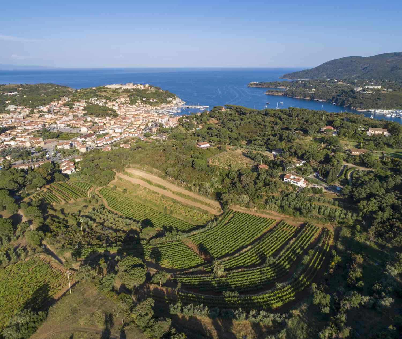 Vigne Arrighi all'Isola d'Elba