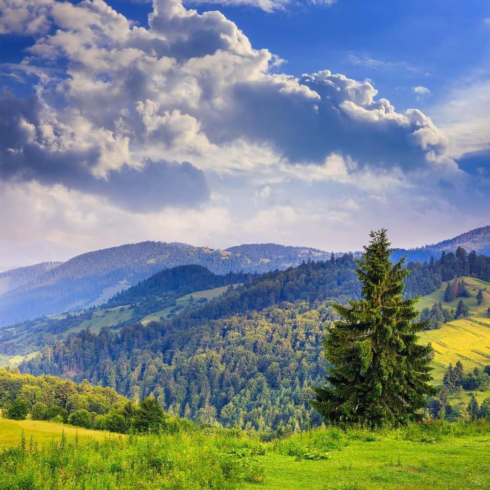 L'abete è uno degli alberi simbolo della nascita e della rinascita.