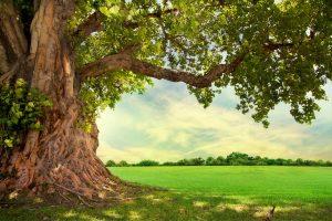 L'albero della vita è simbolo di rinascita e vita eterna