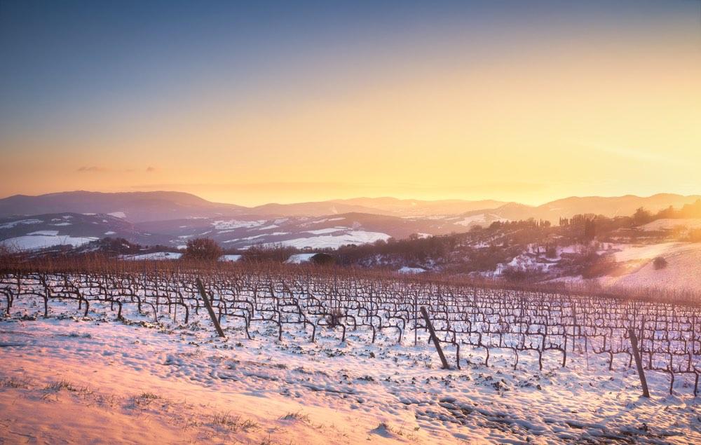 Le vigne del Chianti coperte dalla neve