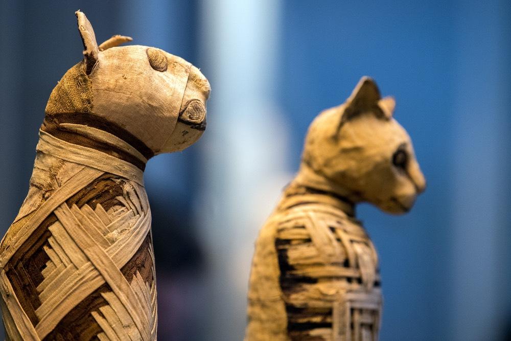 Antiche mummie egiziane di gatti