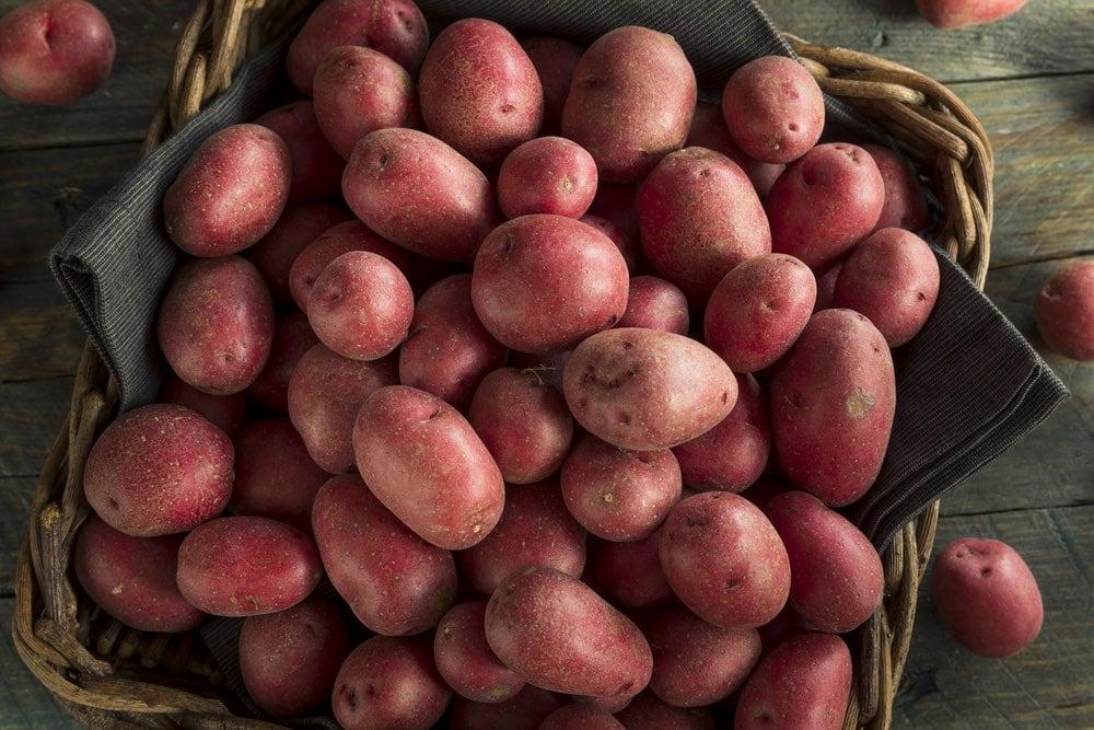 Patata rossa di Cetica, borgo toscano del Casentino