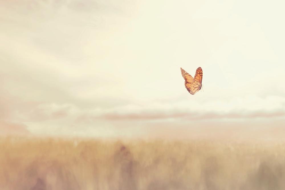 Farfalla che vola in un campo