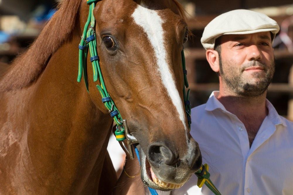 Cavallo con cavaliere prima del Palio